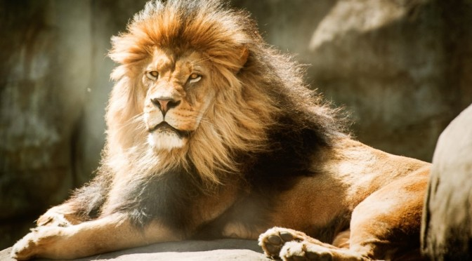 Bold as a Lion ¦ Devotional